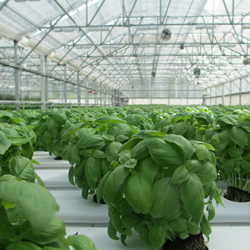 greenhouses_fans